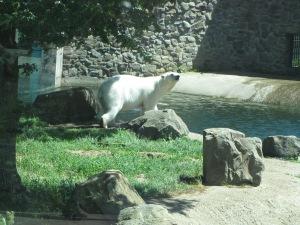 Rhenen Zoo 055